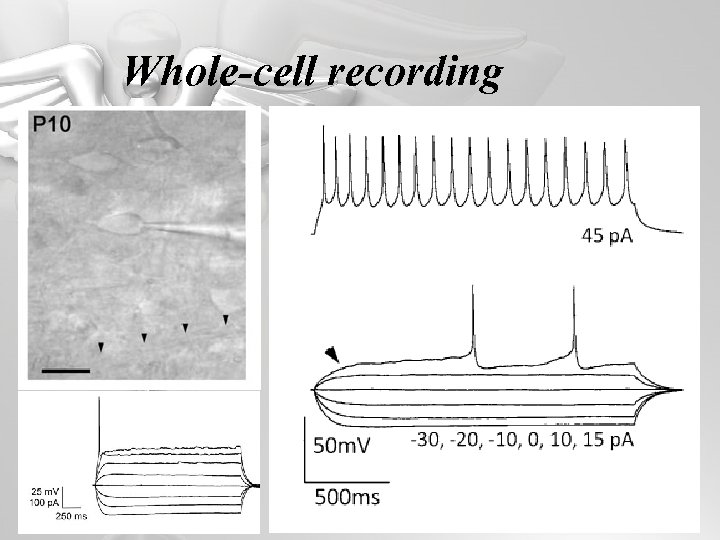 Whole-cell recording