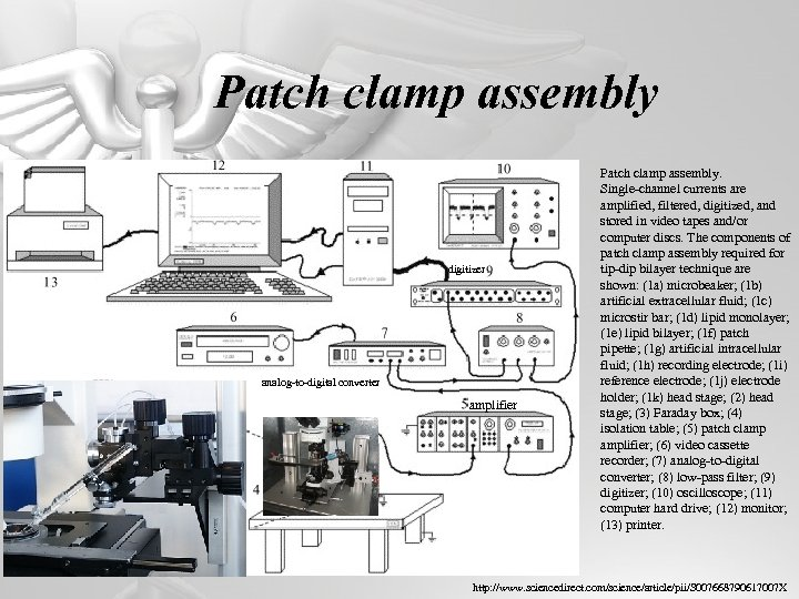 Patch clamp assembly digitizer analog‐to‐digital converter amplifier Patch clamp assembly. Single‐channel currents are amplified,