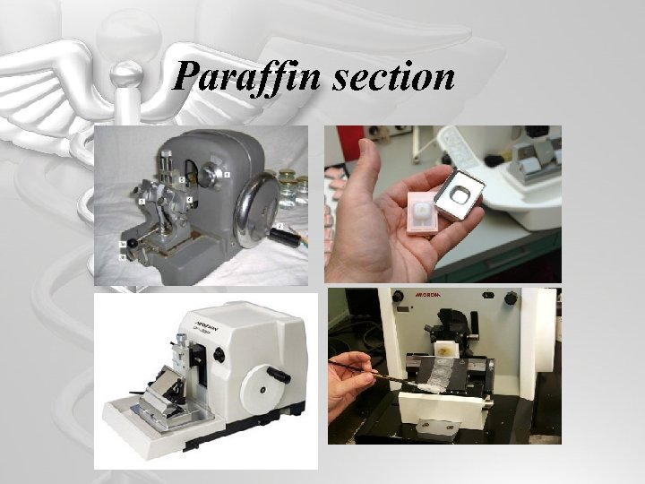 Paraffin section