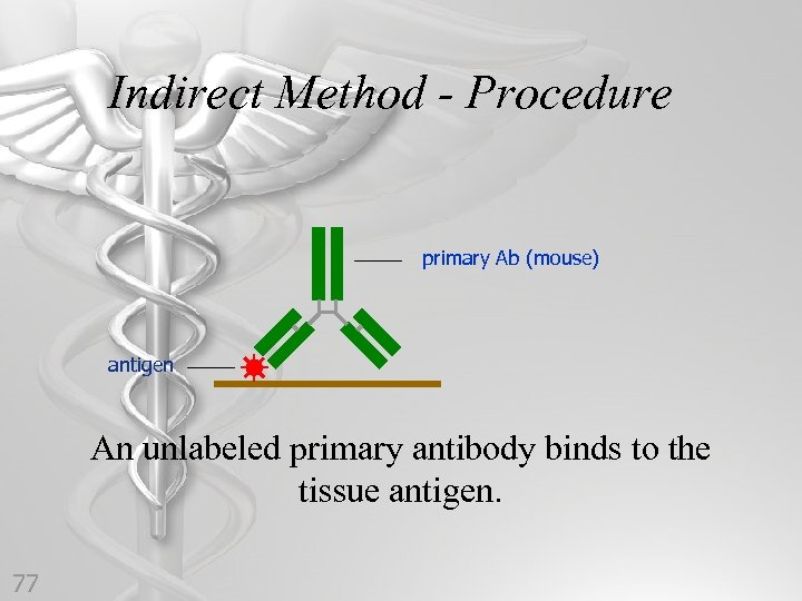 Indirect Method - Procedure primary Ab (mouse) antigen An unlabeled primary antibody binds to