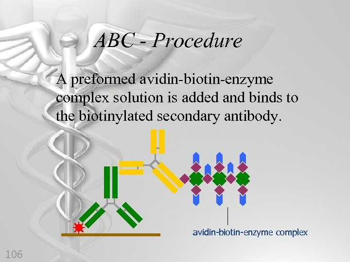 ABC - Procedure A preformed avidin-biotin-enzyme complex solution is added and binds to the