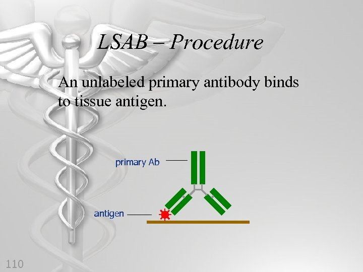 LSAB – Procedure An unlabeled primary antibody binds to tissue antigen. primary Ab antigen