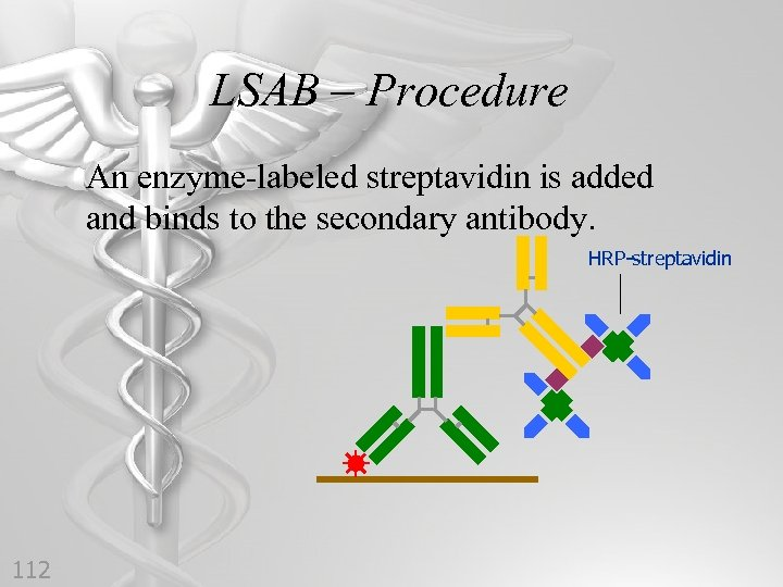 LSAB – Procedure An enzyme-labeled streptavidin is added and binds to the secondary antibody.
