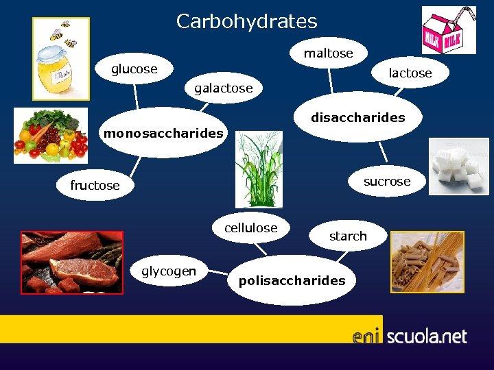 Carbohydrates maltose glucose lactose galactose disaccharides monosaccharides sucrose fructose cellulose glycogen starch polisaccharides