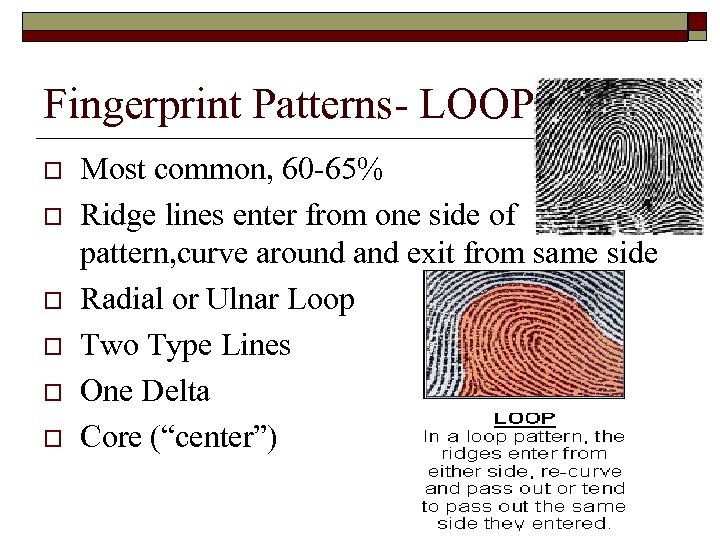 Fingerprint Patterns- LOOP o o o Most common, 60 -65% Ridge lines enter from
