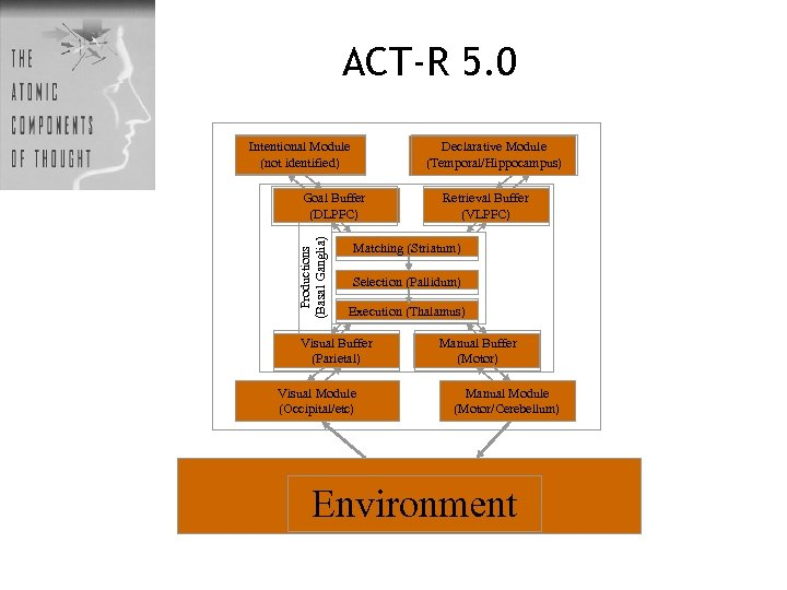 ACT-R 5. 0 Intentional Module (not identified) Declarative Module (Temporal/Hippocampus) Productions (Basal Ganglia) Goal