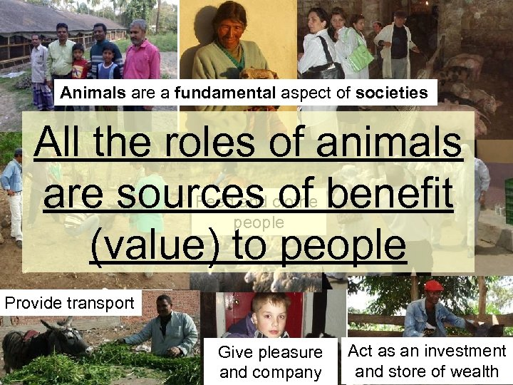 Animals are a fundamental aspect of societies All the roles of animals are sources