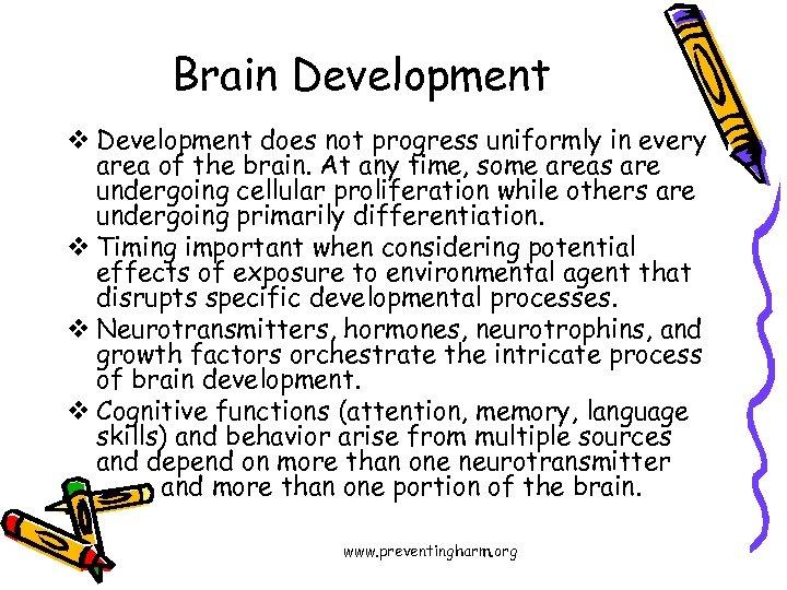 Brain Development v Development does not progress uniformly in every area of the brain.