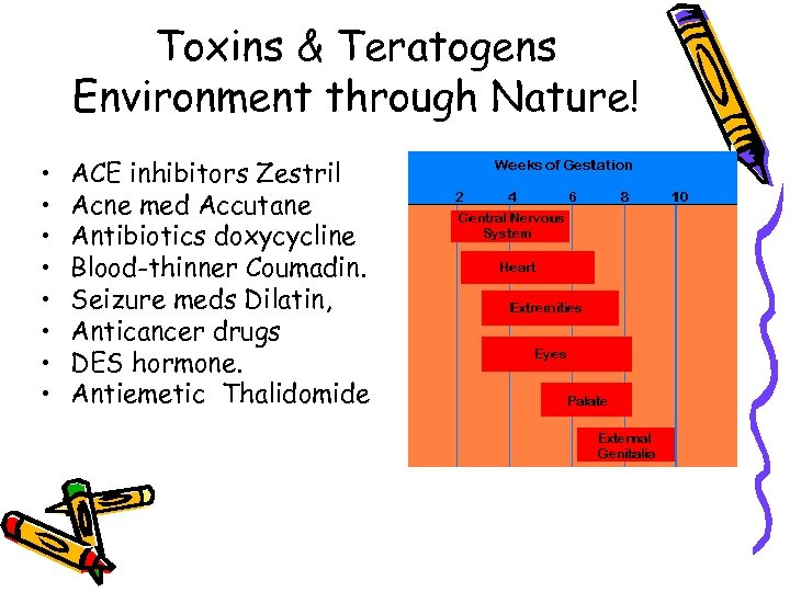 Toxins & Teratogens Environment through Nature! • • ACE inhibitors Zestril Acne med Accutane