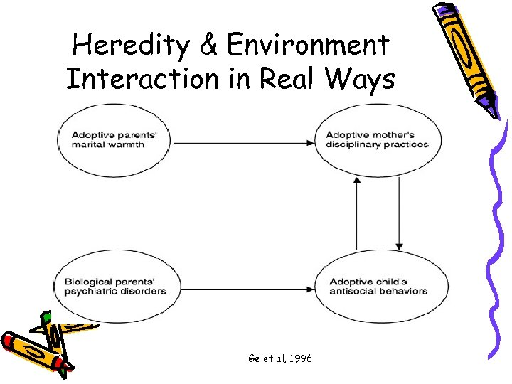 Heredity & Environment Interaction in Real Ways Ge et al, 1996