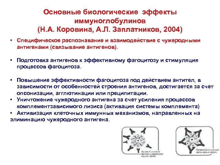 Основные биологические эффекты иммуноглобулинов (Н. А. Коровина, А. Л. Заплатников, 2004) • Специфическое распознавание