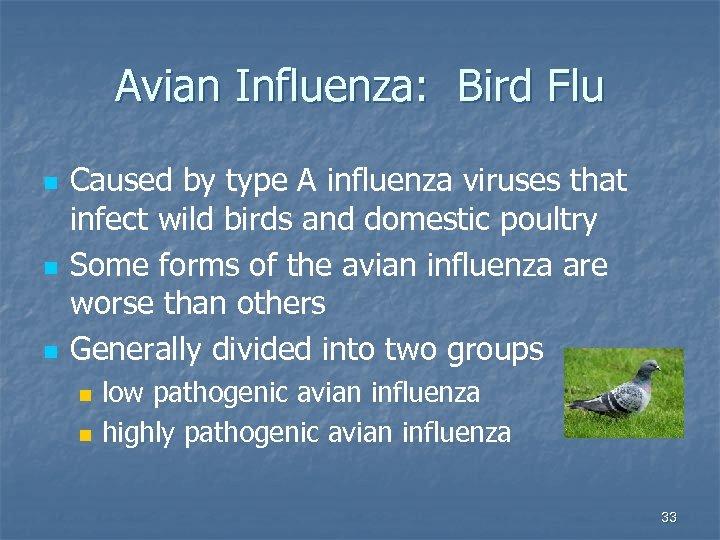 Avian Influenza: Bird Flu n n n Caused by type A influenza viruses that
