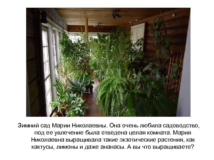 Зимний сад Марии Николаевны. Она очень любила садоводство, под ее увлечение была отведена целая
