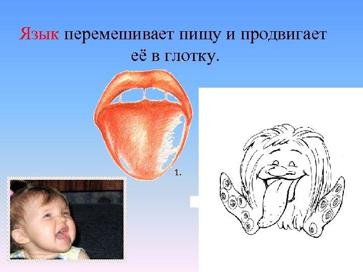 Язык перемешивает пищу и продвигает её в глотку.
