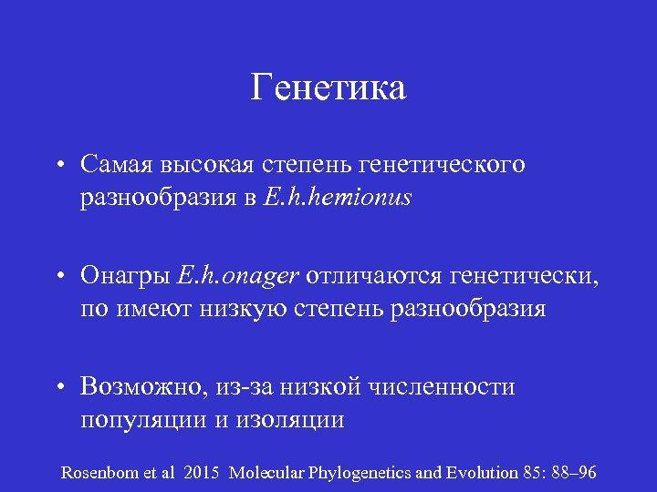 Генетика • Самая высокая степень генетического разнообразия в E. h. hemionus • Онагры E.