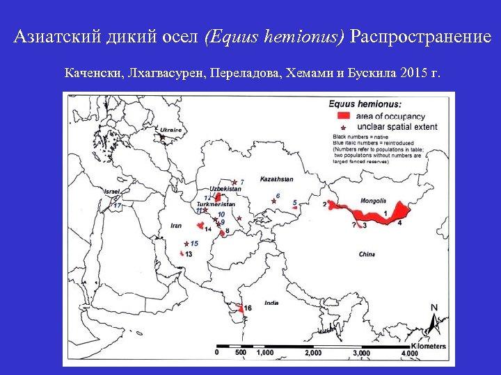 Азиатский дикий осел (Equus hemionus) Распространение Каченски, Лхагвасурен, Переладова, Хемами и Бускила 2015 г.
