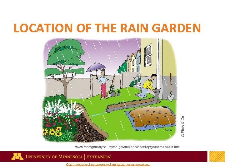 © Fitch & Co. LOCATION OF THE RAIN GARDEN www. montgomerycountymd. gov/mc/services/dep/greenman/rain. htm 12