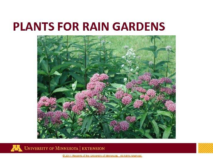 PLANTS FOR RAIN GARDENS 32 © 2011 Regents of the University of Minnesota. All