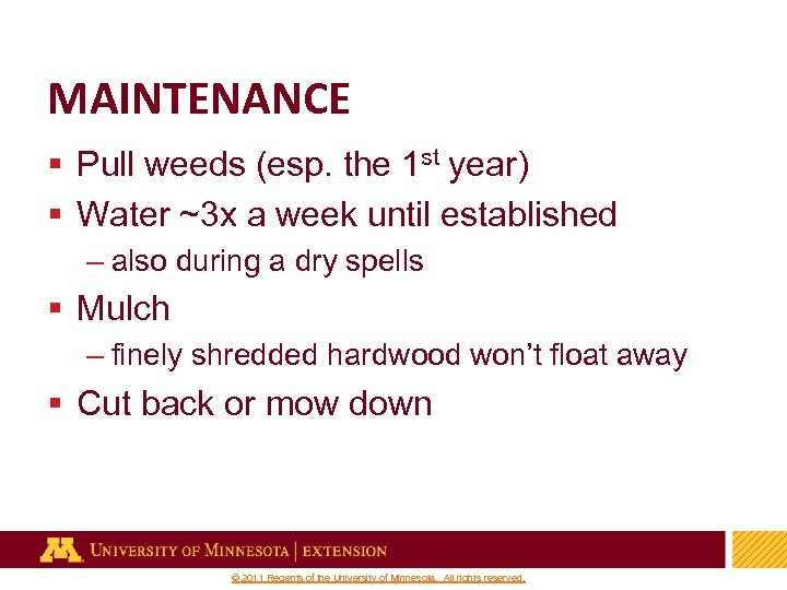 MAINTENANCE § Pull weeds (esp. the 1 st year) § Water ~3 x a
