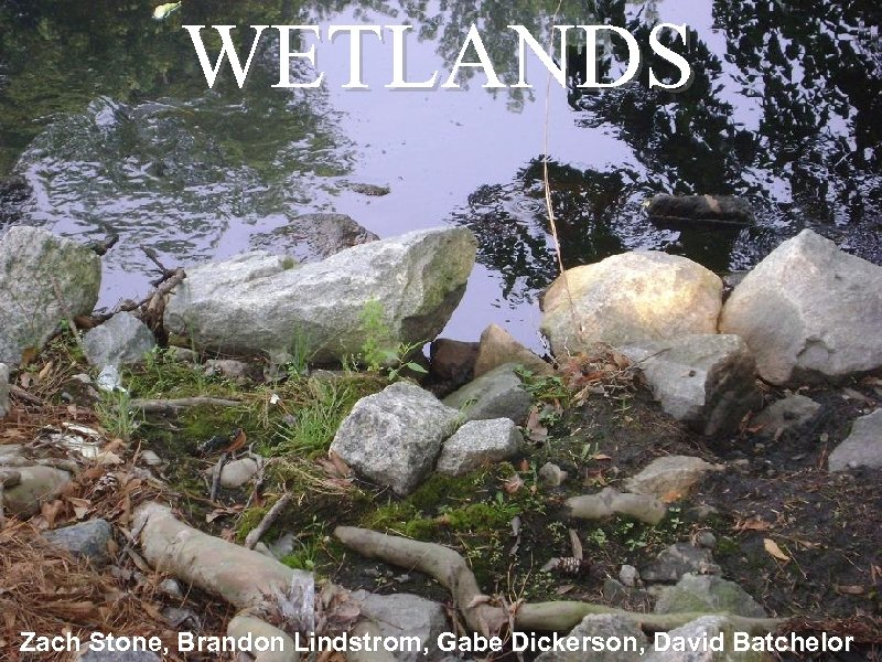 WETLANDS Zach Stone, Brandon Lindstrom, Gabe Dickerson, David Batchelor