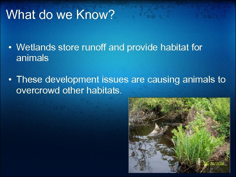 What do we Know? • Wetlands store runoff and provide habitat for animals •