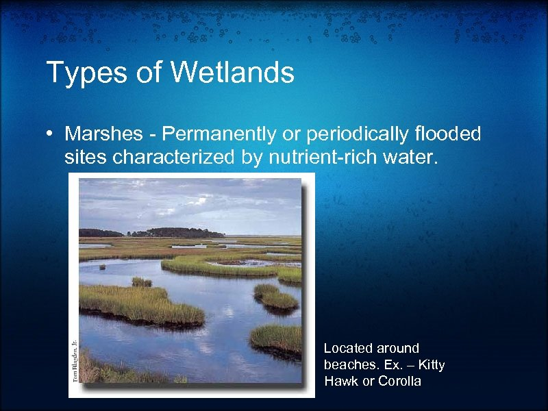 Types of Wetlands • Marshes - Permanently or periodically flooded sites characterized by nutrient-rich