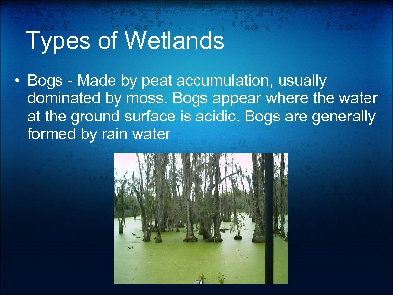 Types of Wetlands • Bogs - Made by peat accumulation, usually dominated by moss.