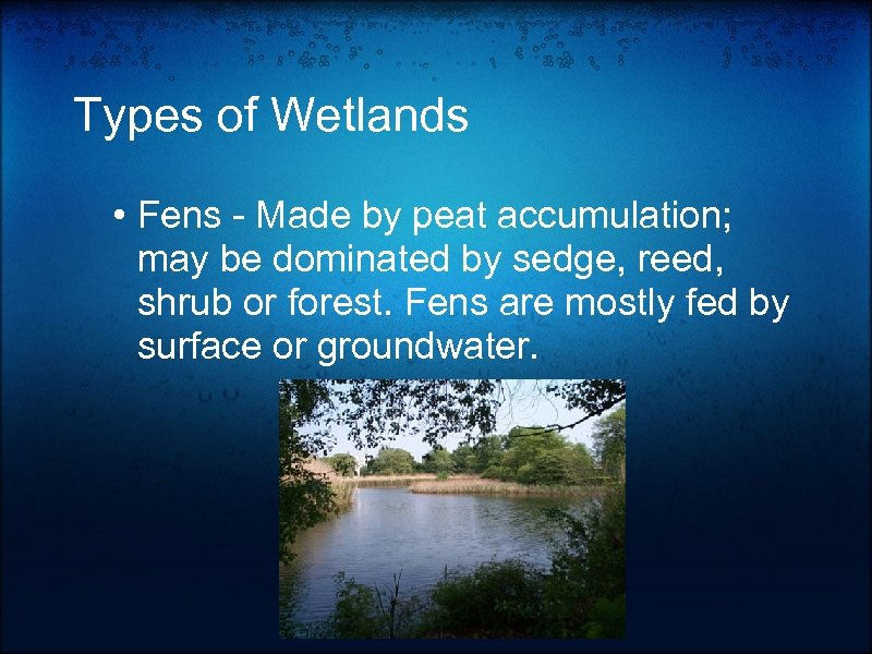 Types of Wetlands • Fens - Made by peat accumulation; may be dominated by