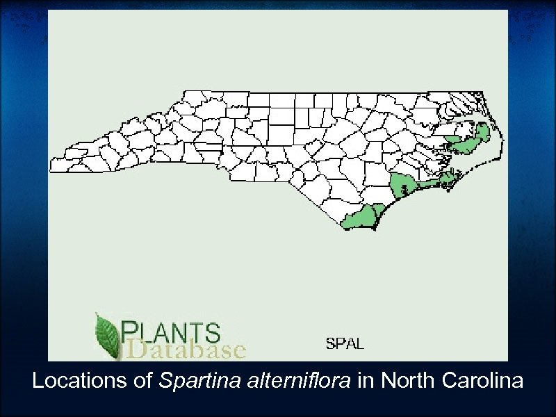 Locations of Spartina alterniflora in North Carolina