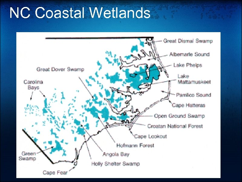 NC Coastal Wetlands