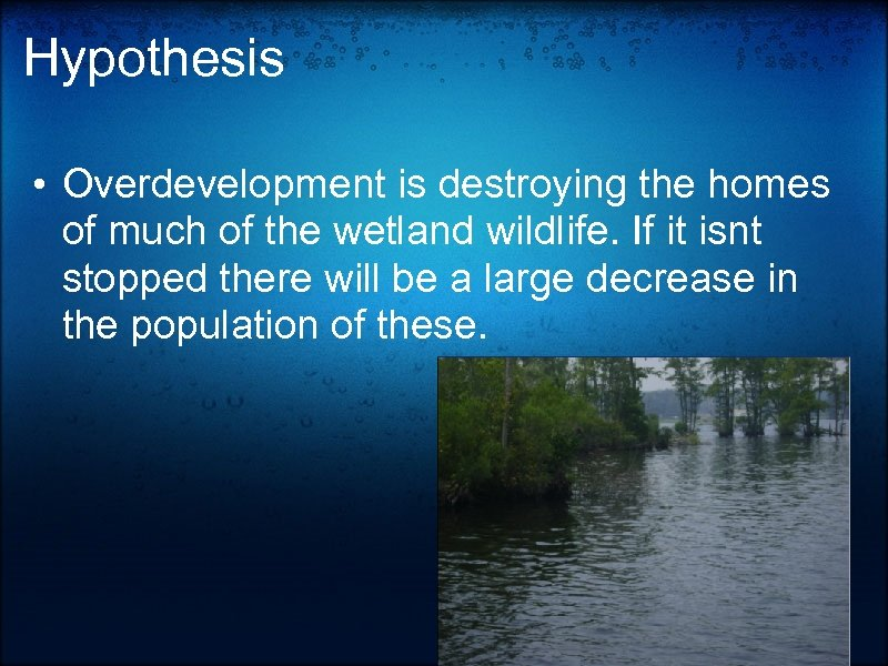 Hypothesis • Overdevelopment is destroying the homes of much of the wetland wildlife. If