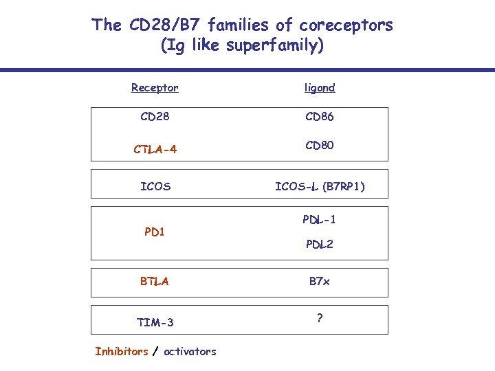 The CD 28/B 7 families of coreceptors (Ig like superfamily) Receptor ligand CD 28