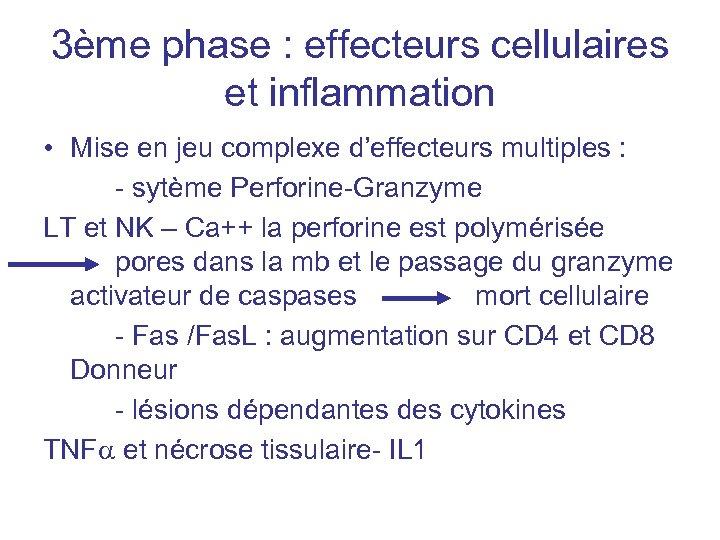 3ème phase : effecteurs cellulaires et inflammation • Mise en jeu complexe d'effecteurs multiples