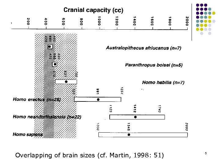 Overlapping of brain sizes (cf. Martin, 1998: 51) 5