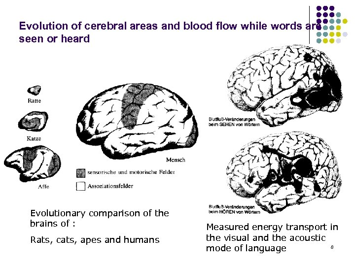 Evolution of cerebral areas and blood flow while words are seen or heard Evolutionary