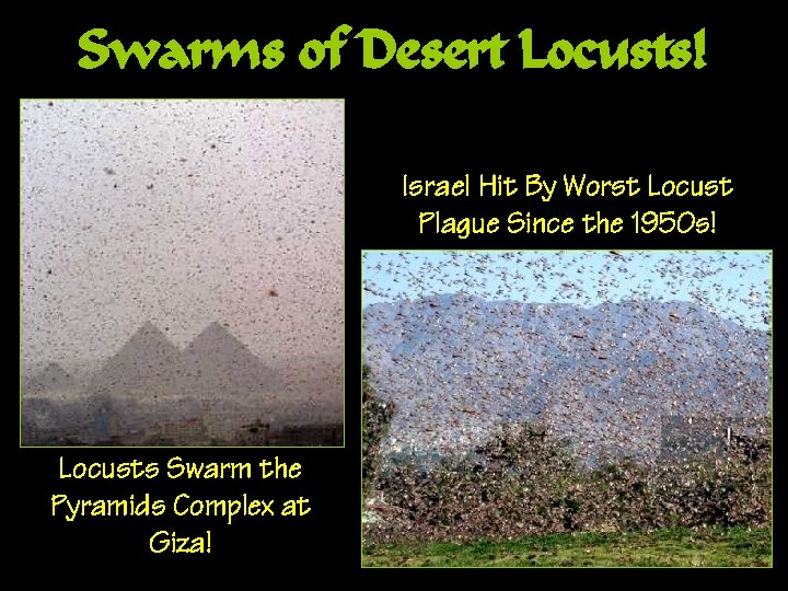 Swarms of Desert Locusts! Israel Hit By Worst Locust Plague Since the 1950 s!