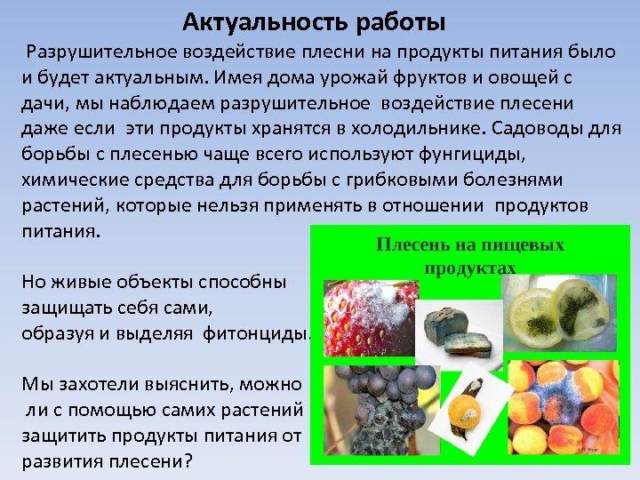 Актуальность работы Разрушительное воздействие плесни на продукты питания было и будет актуальным. Имея