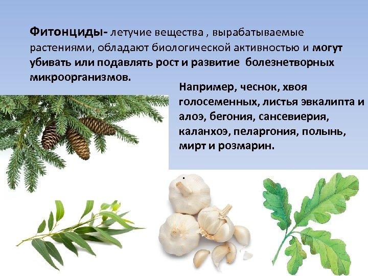 Фитонциды- летучие вещества , вырабатываемые растениями, обладают биологической активностью и могут убивать или подавлять