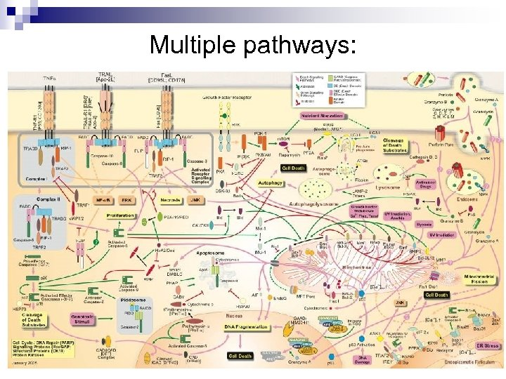 Multiple pathways: