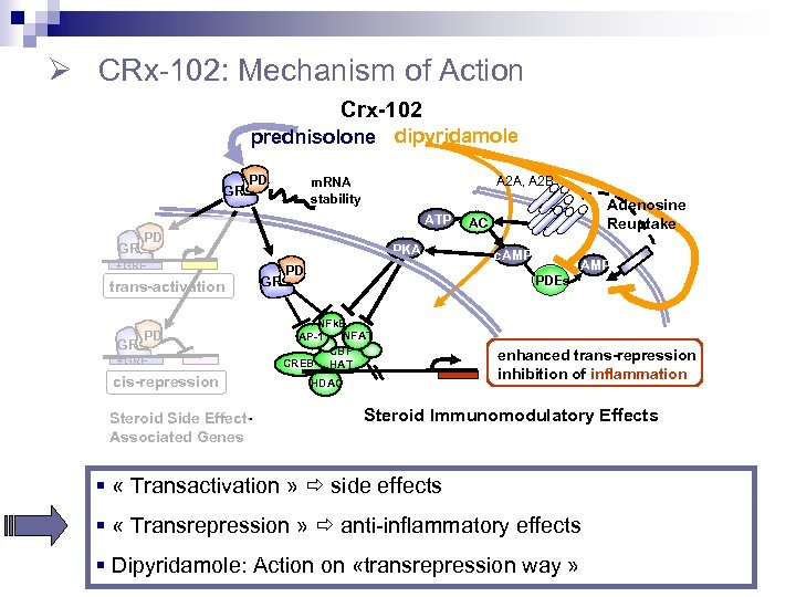 Ø CRx-102: Mechanism of Action Crx-102 prednisolone dipyridamole GR PD A 2 A, A