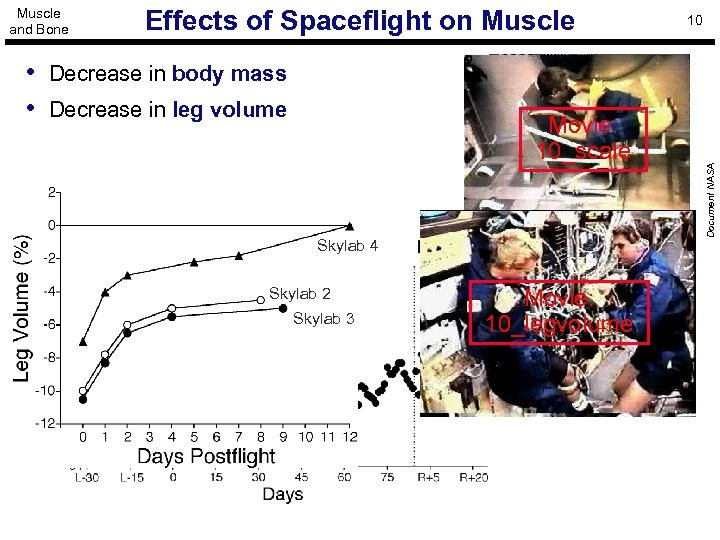 Effects of Spaceflight on Muscle • Decrease in body mass • Decrease in leg