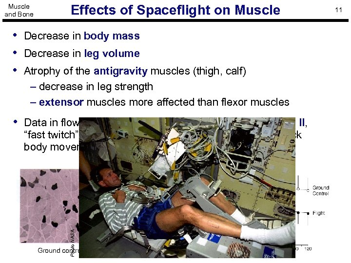 Muscle and Bone Effects of Spaceflight on Muscle • Decrease in body mass •