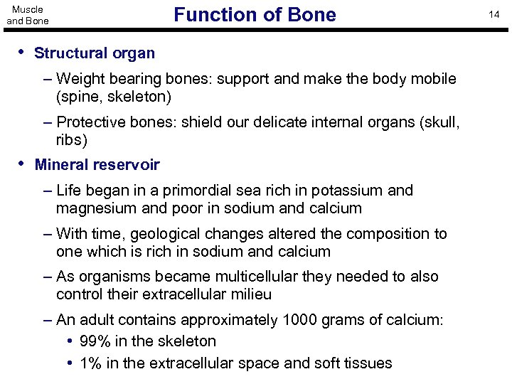 Muscle and Bone Function of Bone • Structural organ – Weight bearing bones: support