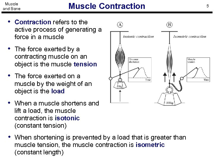 Muscle and Bone Muscle Contraction • Contraction refers to the active process of generating