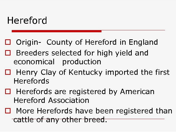 Hereford o Origin- County of Hereford in England o Breeders selected for high yield