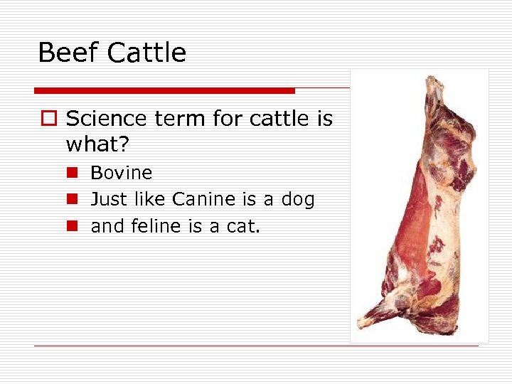 Beef Cattle o Science term for cattle is what? n Bovine n Just like