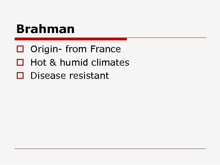 Brahman o Origin- from France o Hot & humid climates o Disease resistant