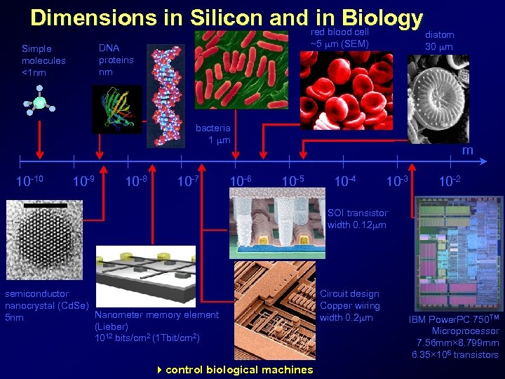 Dimensions in Silicon and red blood cell in Biology ~5 m (SEM) DNA proteins