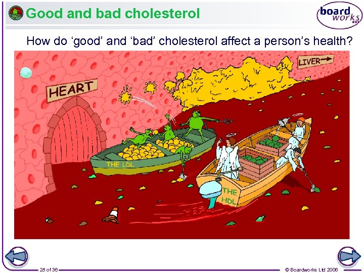 Good and bad cholesterol How do 'good' and 'bad' cholesterol affect a person's health?