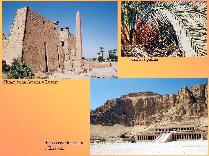 datľová palma Chrám boha Amona v Luxore Hatsepsovetin chram v Thebach